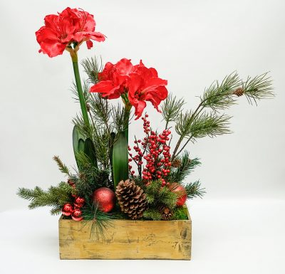 Amarylis with pine cones in wood box
