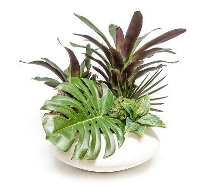 Bromeliad with Monstero in White Bowl