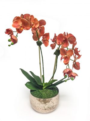 Coral Orchid in Brass Vase