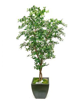 Florida Olive Tree in Zinc