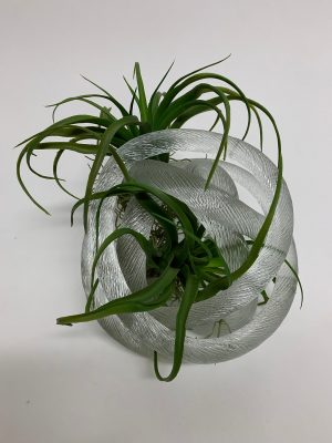 Glass Knot with Tilandsia