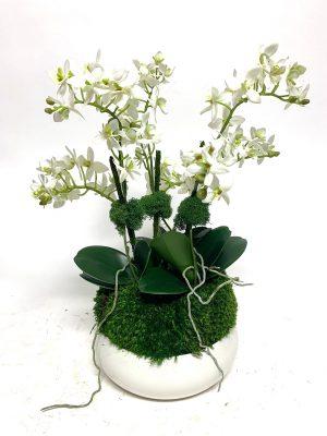 Mini White Orchids in Bowl