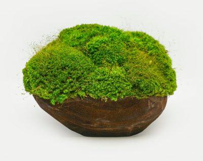 Mood Moss in Wood