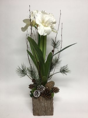 White Amarylis with pine cones in wood box