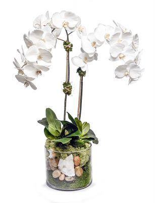 White Orchid in Glass Bowl