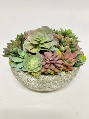 succulents in beige bowl