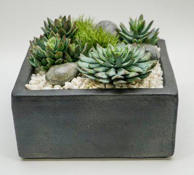 succulents in gunmetal square