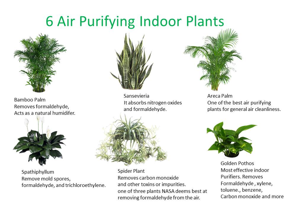 6 Good Indoor Plants