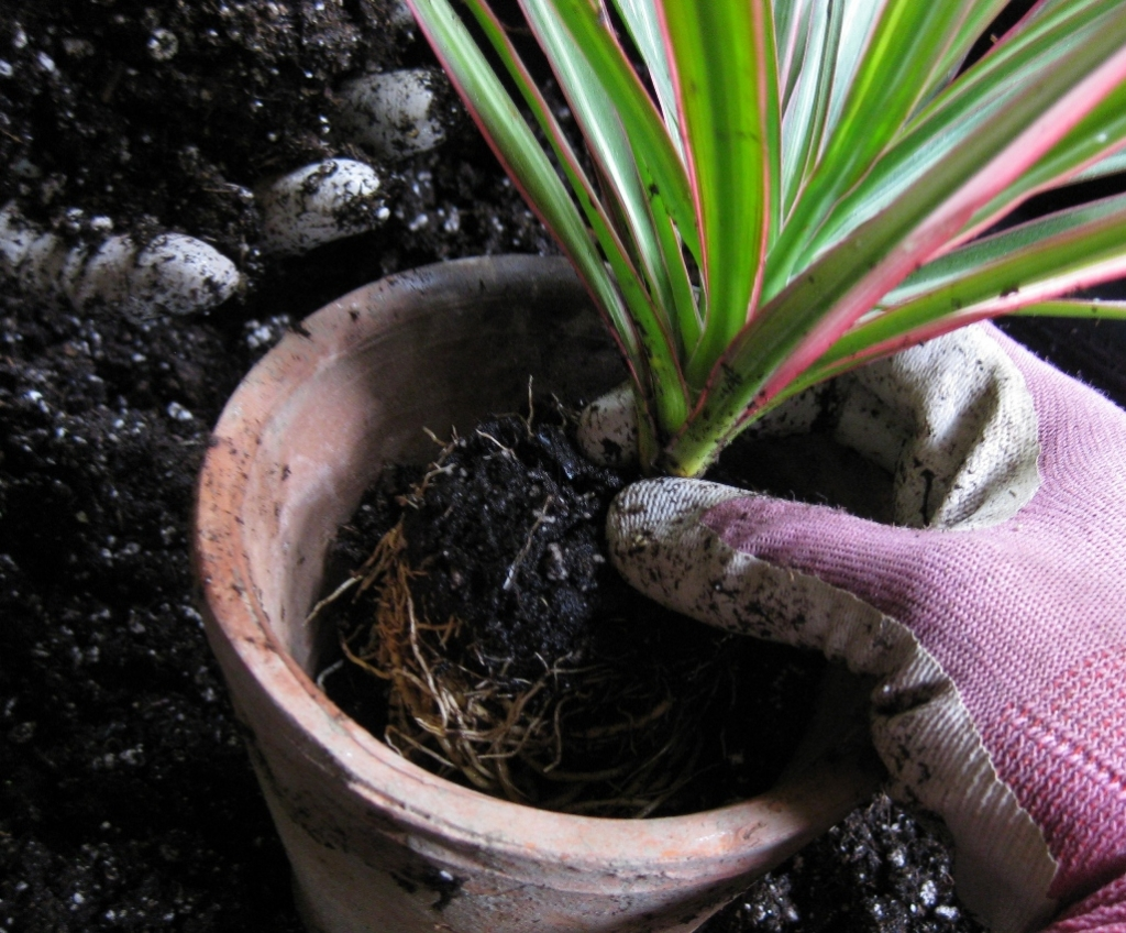BLOG-Repotted-Plant-cropped