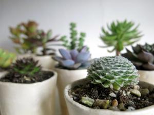Cactus pot soil
