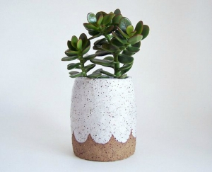 jade in little pot