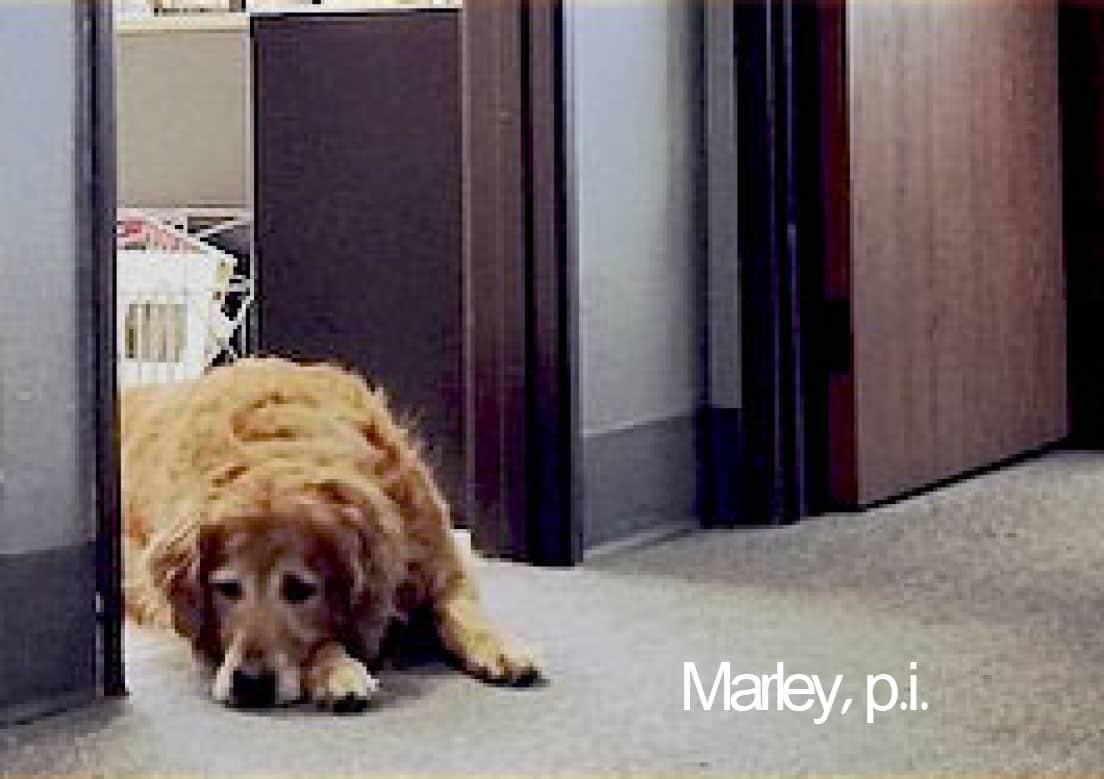 Marley Plantscapers seeks Reuben on Rye