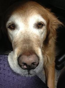 Marley, PI, finds Reuben sandwich