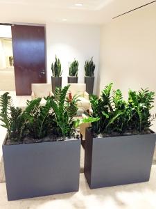 ZZ-Plants-in-fiberglass-Earthwalls-2