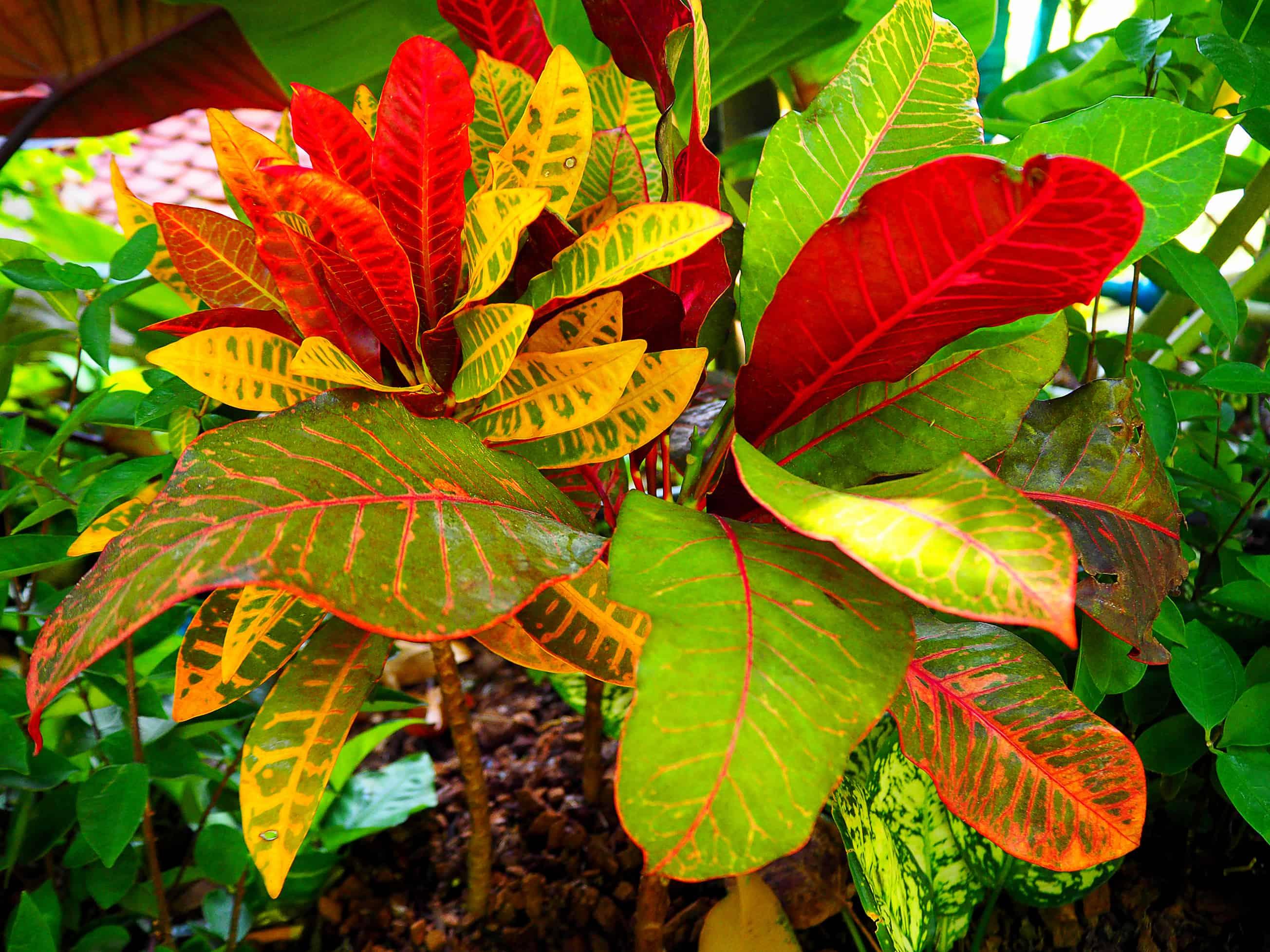Plant leaves, Plants, Color