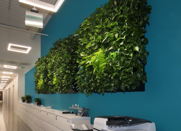 Living wall designed by Plantscapers