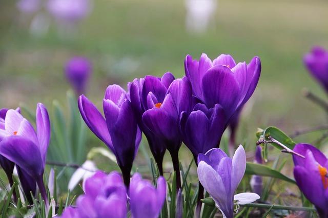 violet-4032577_640