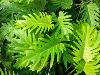 Danger in the Indoor Forest: Poisonous Plants You Need to