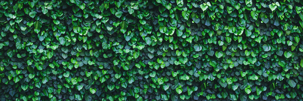Living walls are an example of biophilia