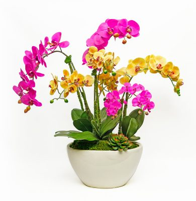 Multiply Colored Orchids in Cream Vase