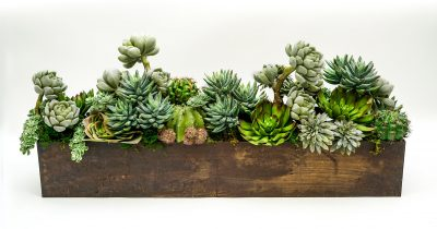 Succulents in wood rectangle