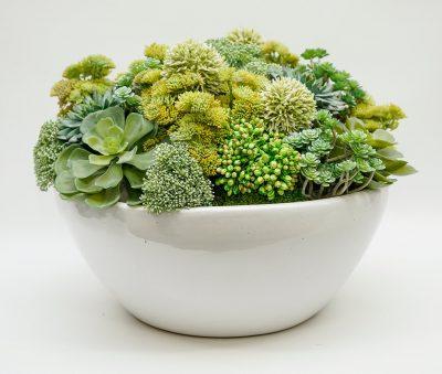 sedum in white bowl