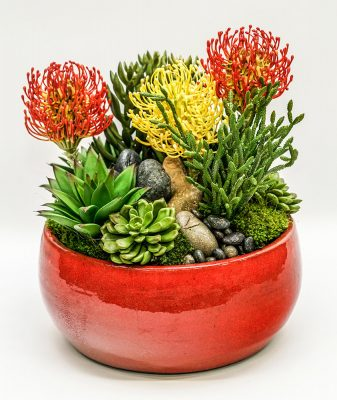 succulent in red bowl