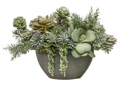 succulent in zinc flat bowl