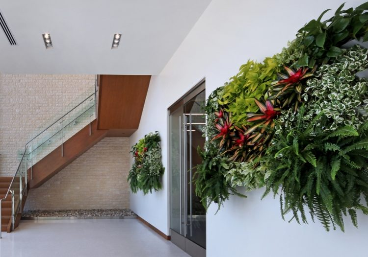 Natural light is the perfect environment for living walls.